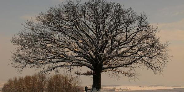 Die Bildereiche im Winter