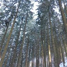 Wald mit Sonnenschein
