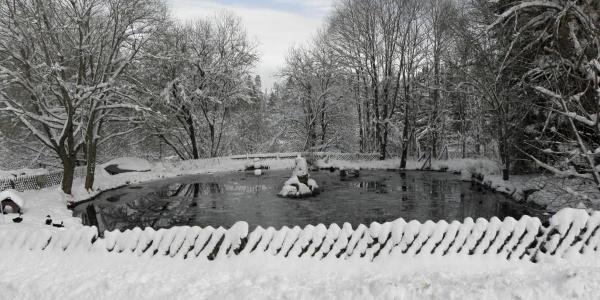 Teich beim Gasthaus Breitbrunnen