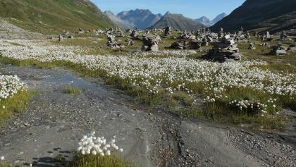 Steinmandli- Kolonie mit Blick nach Norden
