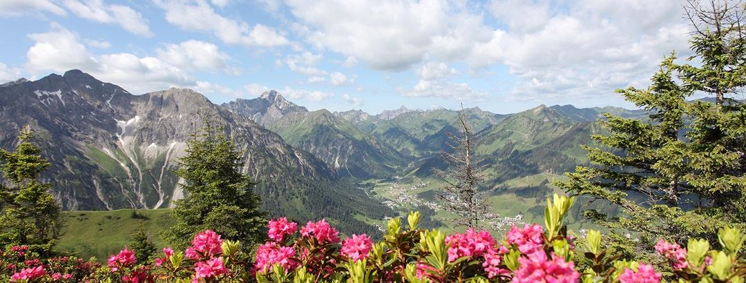 Alpenrosen überziehen die Berge im Frühling.