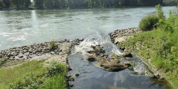 Leimbachmündung in den Rhein