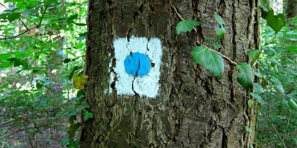 "Der ""blaue Punkt"" führt uns zum Judenfriedhof"