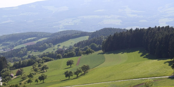 Waldlehrpfad (Richtung Waldhof Muhr): Blick in die obere Zeil und ins Pöllauer Tal