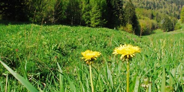 """Blick von der """"grünen Wiese"""" in Losenheim auf die Lahningries"""