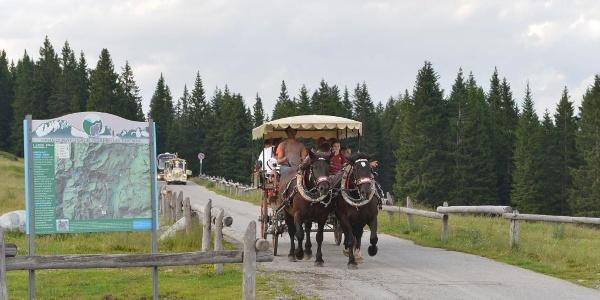 Horse-carriage to Ritorto alpine hut