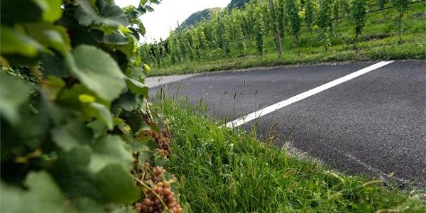 Sentiero del vino a Caldaro
