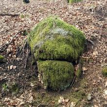 Ist hier ein Troll vergraben?