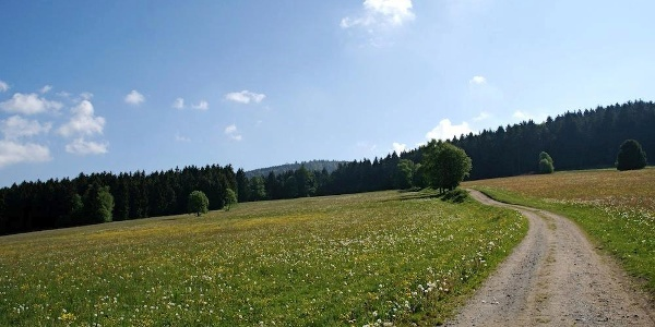 Weg von Grün nach St. Bernhard