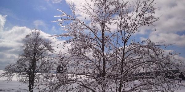 Winter im Oberharz