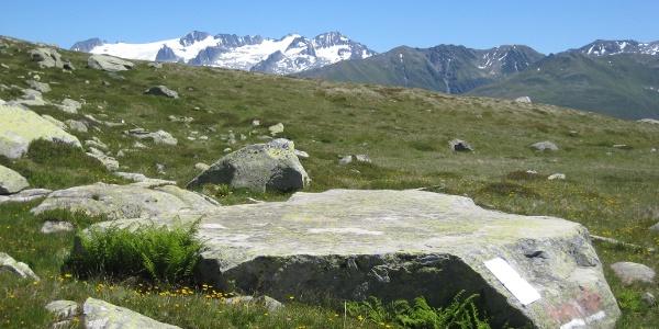 Hexenplatte mit Piz Medel im Sommer