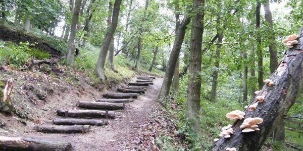 Ein steiler Pfad mit Holzstufen führt uns hinauf zum Jagenstiel.