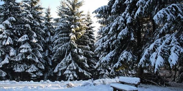Winterlandschaft in Elbingerode