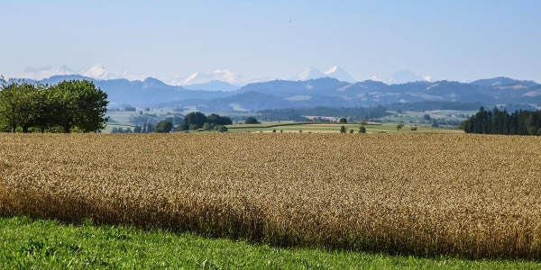 Gondiswil – Madiswil