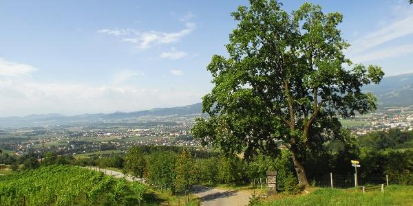 Wolfsberg Weinwanderweg 2- Weingarten beim Lenzbauer