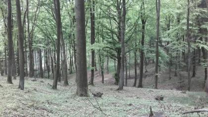 Kürnberg Wald
