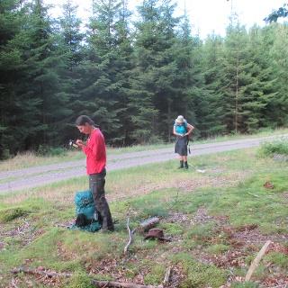 Många rastplatser längs de små skogsvägarna