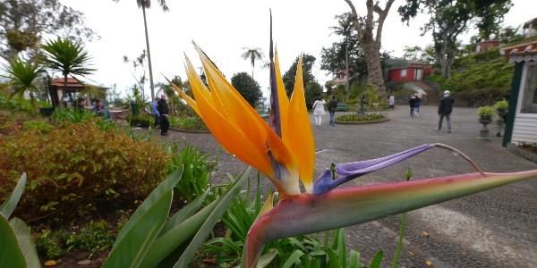 In den Jardins do Monte Palace