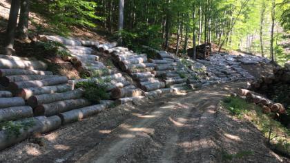 Holzarbeiten 2016 - nördlich Hermannskogel
