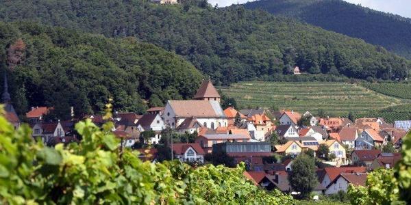 Burrweiler im Rebenmeer