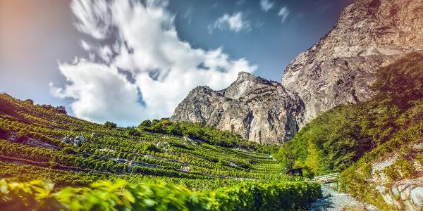 Walliser Weinberge entlang dem Weinweg