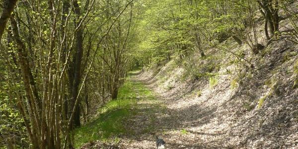 """Waldweg zur Höhle """"Odel´s Uwe"""""""
