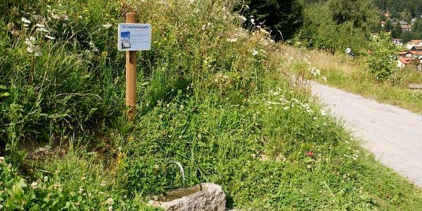 Leonhardi-Quelle (historische Heilquelle)