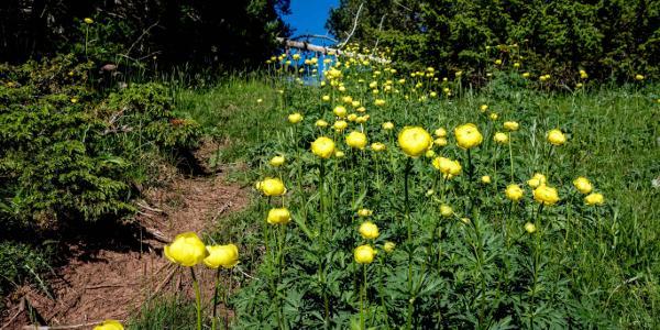 Anfang Juni ist beste Blumenzeit ;)