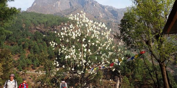 Magnolienbäume 2705m