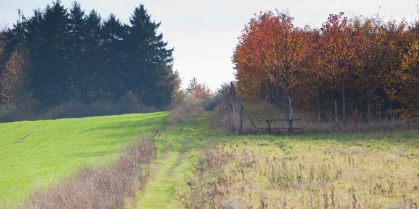 Wiesenweg oberhalb Fellerhof