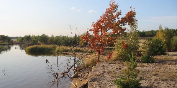 Blick ins Lausitzer Seenland