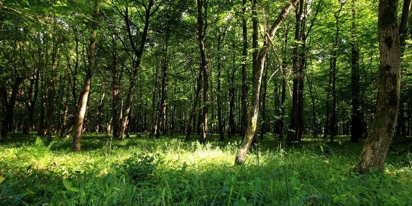 junger Mischwald auf dem Heineberg