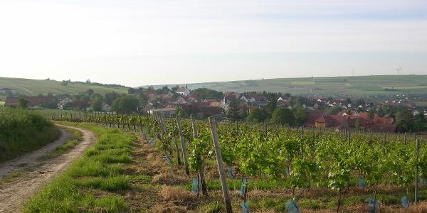Weinberge bei Einselthum