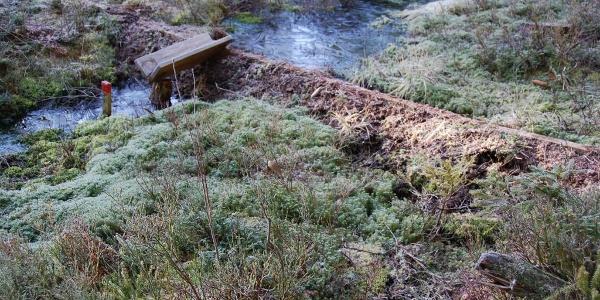 Horbacher Moor
