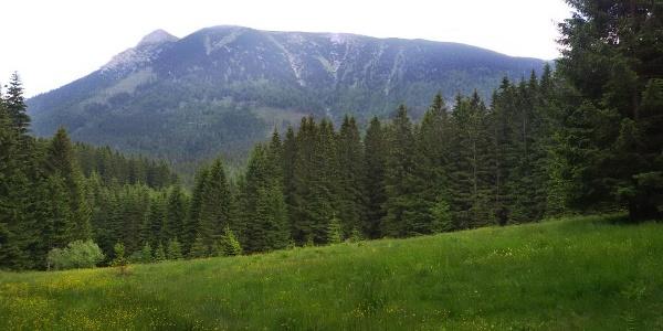 Blick auf den Großen Ötscher