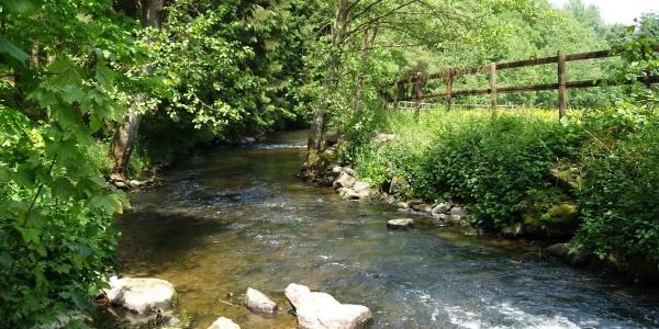 Flusslauf - Die Amel