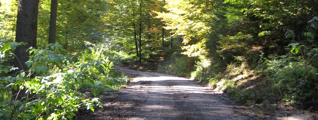 Weg durch den Osterwald