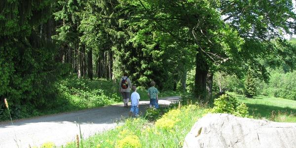Wiese kurz vor dem Molkenhaus in Bad Harzburg