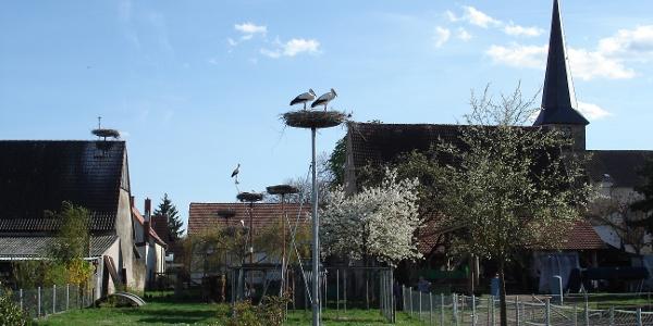 Storchennester am Brühlgraben in Knittelsheim