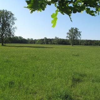 Idyllische Wiesenlandschaft am Bellheimer Wald
