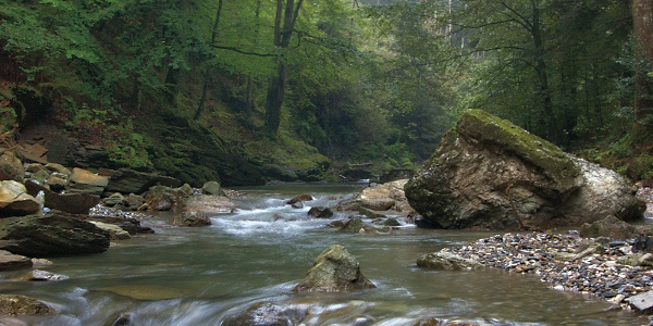 Raabklamm Märchenwald