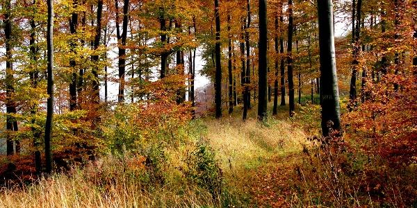 Herbst im Teutoburger Wald.