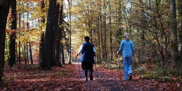 Nordic Walking im Bellheimer Wald