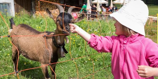 Tierische Begegnungen möglich