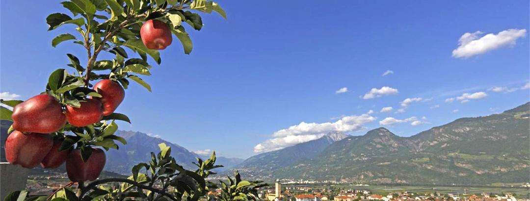 Zur Apfelblüte nach Südtirol