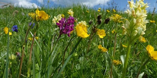 Blumenwiese neben Krabesalm