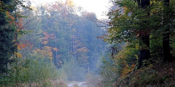 Forstweg zum Nutzhof