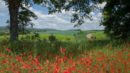 Kraichgauer Hügelland