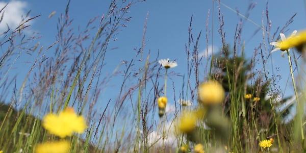 Blumen, Kräuter, Gräser