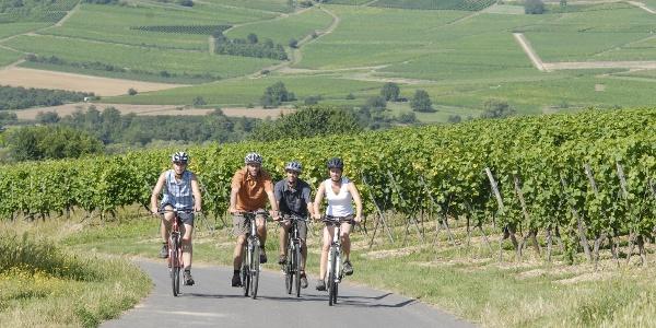 Radeln durch Rheinhessens Weinhügel